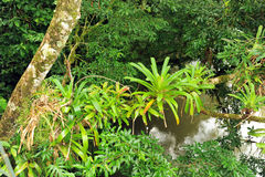 Bromeliads en árbol Fotos de archivo libres de regalías