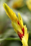 Bromeliads en la floración Foto de archivo