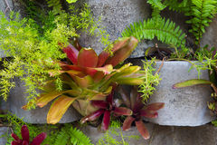 Bromeliads flower on a vertical garden. Bromeliad flower and other tropical plants on a vertical garden Stock Photo