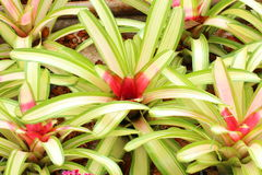 Bromeliads into groups. Stock Photography