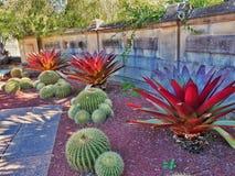 Bromeliads i kaktus rośliny zdjęcie royalty free