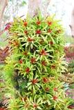 Bromeliads na drzewach w ogródzie. Zdjęcia Royalty Free