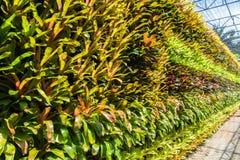 Bromeliads plants wall Royalty Free Stock Photo