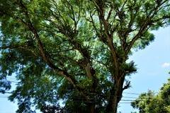 Bromelias que crecen en árbol en el parque nacional de Carara imagen de archivo libre de regalías