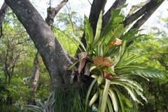Bromelie-Anlage im Garten lizenzfreie stockfotos