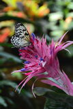 Bromeliade Flower and Butterfly Stock Photos