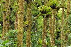Bromiliads auf Bäumen stockbild