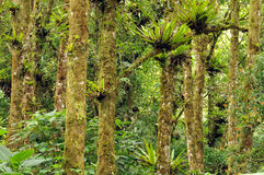 Bromiliads on trees Stock Image