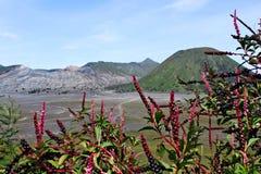 Bromo武尔卡诺岛腾格尔塞梅鲁火山国家公园 免版税库存图片
