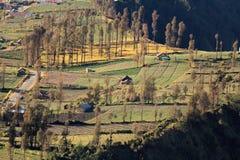 Bromo的印度尼西亚平安的Cemoro Lawang村庄 免版税图库摄影