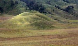 Bromo холма Teletubbies Стоковое Фото