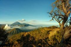 Bromo-Berg mit Niederlassungsbaumvordergrund lizenzfreies stockfoto