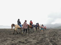 Bromo horse Royalty Free Stock Photos