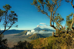 Bromo mountain with branch tree foreground Stock Photography