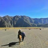 Bromo-Pferd lizenzfreies stockbild