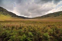 Bromo savann Arkivbilder