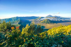 Bromo volcano at sunrise, East Java, , Indonesia Royalty Free Stock Photography