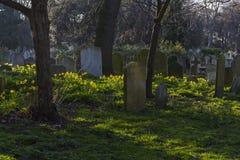Brompton Cemetery Royalty Free Stock Photo