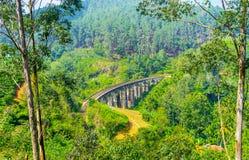 Bron i djungel av Sri Lanka royaltyfri fotografi