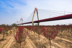 Bron med sakura blommor Royaltyfri Bild