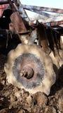 Brona w ziemi Zdjęcie Royalty Free