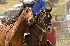 Bronc Riding Royalty Free Stock Photography