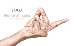 Bronchial mudra Royalty Free Stock Image