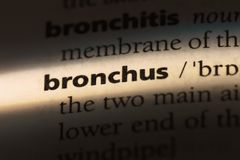 Bronchus. Word in a dictionary.  concept stock images