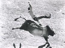 Bronco buster Royalty Free Stock Photo