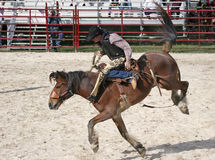 Bronco que monta 4 Fotografia de Stock Royalty Free