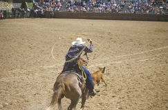 Bronco rider coming out of gate with lasso, Inter-Tribal Ceremonial Indian Rodeo, Gallup NM Royalty Free Stock Photography