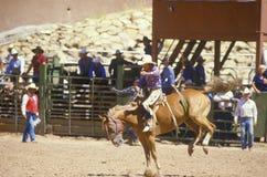 Bronco riding Royalty Free Stock Photo