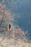 Bronde draußen im Wald stockbilder