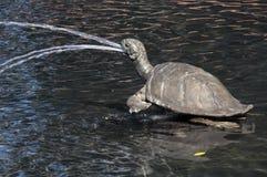 Bronsskulptur av sköldpaddan i vattenspringbrunn royaltyfri bild