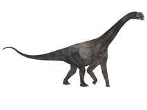 Brontomerus Side Profile. Brontomerus was a herbivorous sauropod dinosaur that lived in the Cretaceous Period of Utah, USA Stock Photography