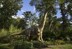 brontosaurus fotografia stock libera da diritti