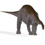 Brontosaurus d'aka d'Apatosaurus Images libres de droits