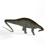 Brontosaurus d'aka d'Apatosaurus Photos libres de droits