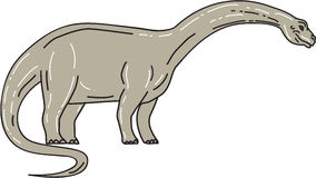 Brontosaurus Dinosaur Looking Down Mono Line. Illustration of a Brontosaurus meaning `thunder lizard, a genus of gigantic quadruped sauropod dinosaurs that lived Stock Photography