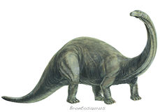 Brontosaurus. One of the heaviest land animals ever known weighing over 20 tons 20tonnes. Length about 60ft 18m. Jurassic, about 170 – 135 million years ago Stock Image