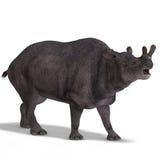 brontotherium恐龙 库存照片