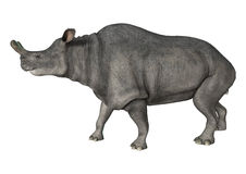 Brontotherium Royalty Free Stock Image