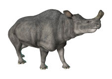 Brontotherium or Thunder Beast Royalty Free Stock Image