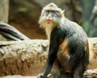 Bronx zoo Arkivbilder
