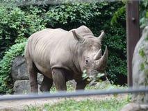 Bronx-Zoo-Nashorn 3 stockfoto