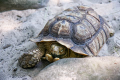Bronx Zoo. Old turtle you can see at Bronx Zoo, New York stock photos