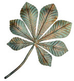Bronze chestnut leaf. Royalty Free Stock Images