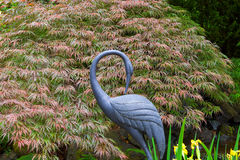 Bronze Crane with Red Japanese Maple Tree Background. Bronze crane statue sculpture by Red Japanese Maple Tree in home garden backyard spring season Stock Photos