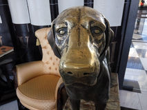 Bronze dog in the restaurant Stock Images