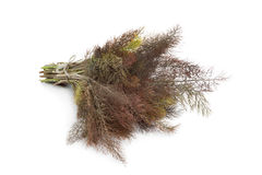 Bronze fennel Stock Photos